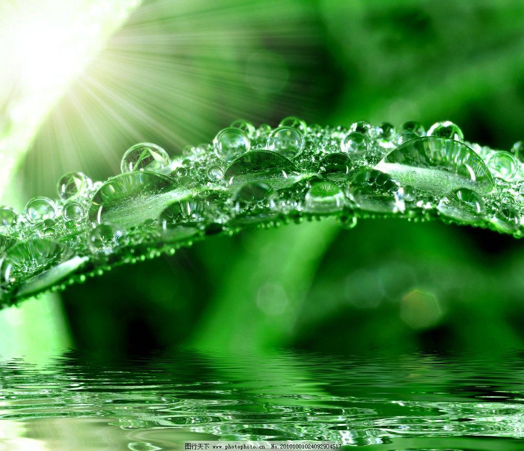 绿叶高清图片 绿叶 阳光 光线 树叶 水面 水珠 水滴 自然风景 自然