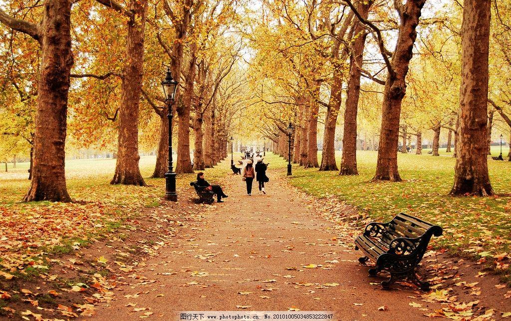 花草 生物世界 树木树叶 摄影 100dpi jpg 自然风光高清图片 自然风景