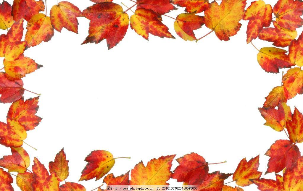 树叶背景 枫叶 边框 相框 秋色 树叶 落叶 树叶相框素材 相框素材