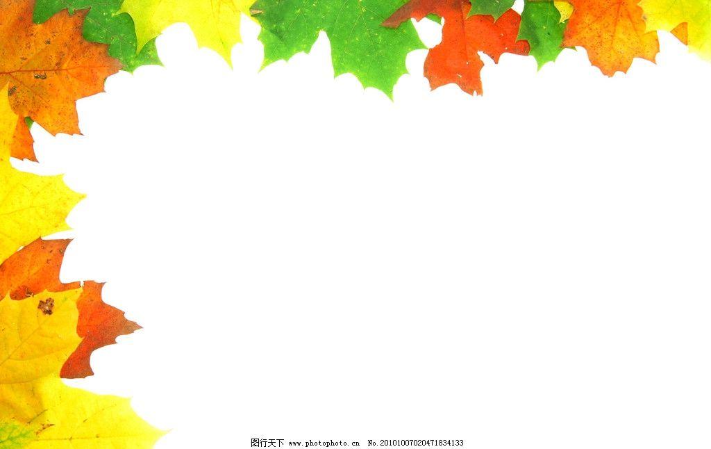 树叶背景图片图片