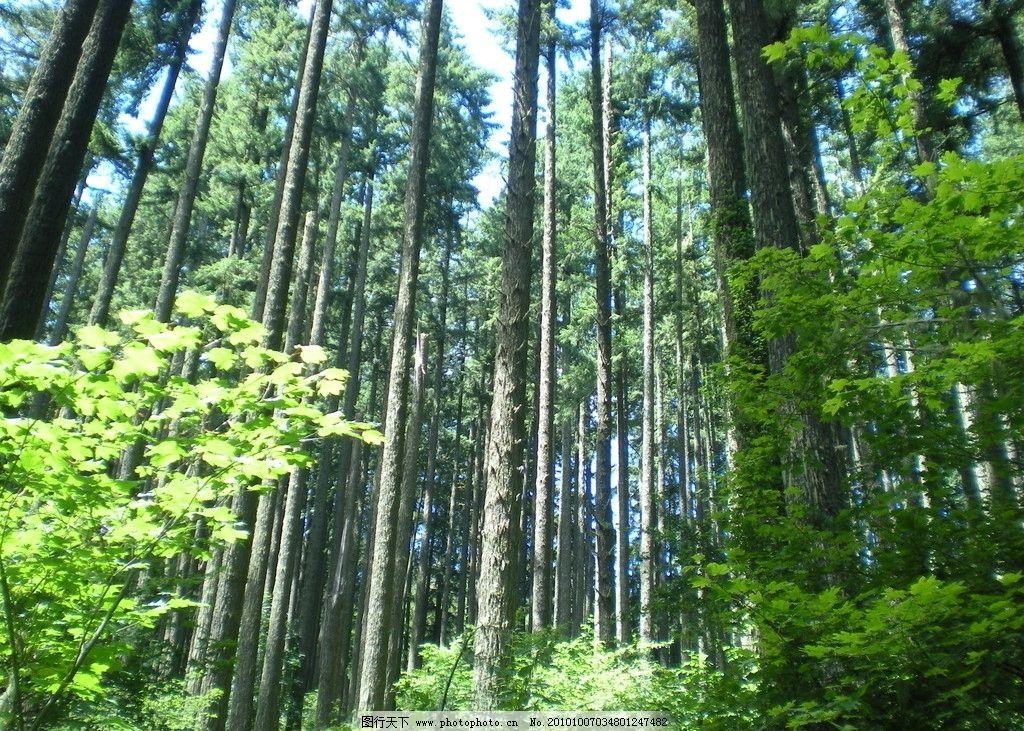 风光摄影 林中景色 树林景色 树林 美丽风光 美丽风景 风光图片 自然