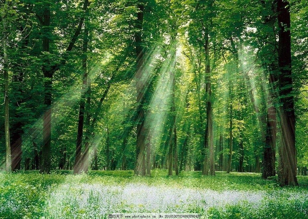 树林风光 浓荫 绿树 自然 自然风光 大树 树干 绿色 丛林 草坪