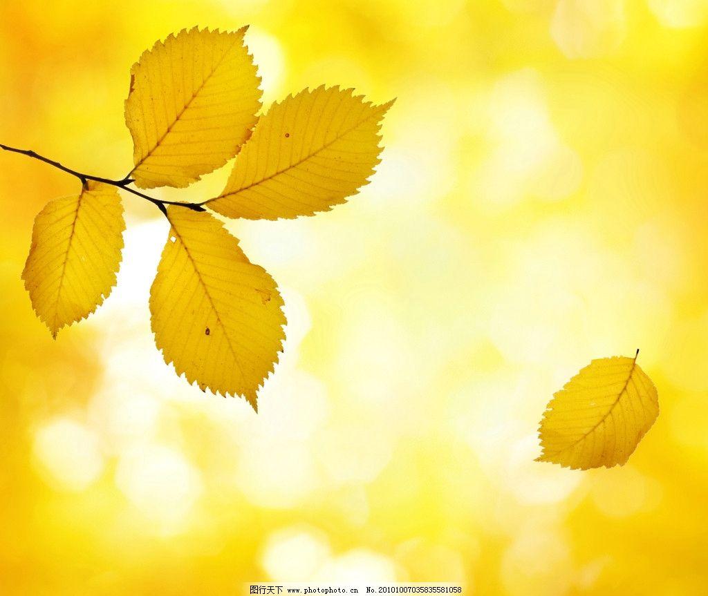 树叶落叶高清图片