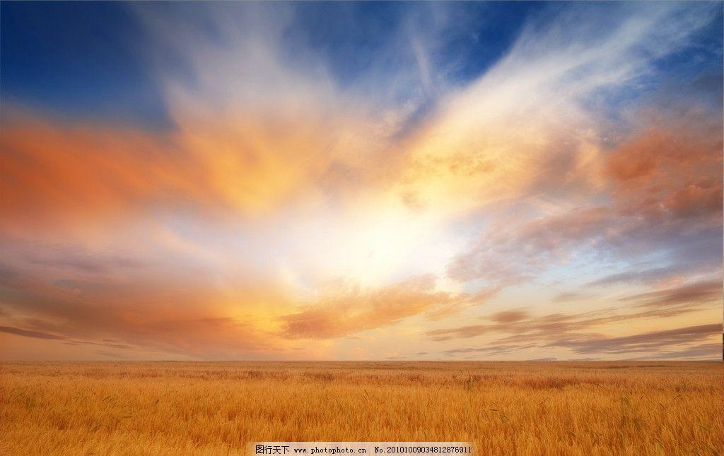 阳光下的麦田图片_自然风景