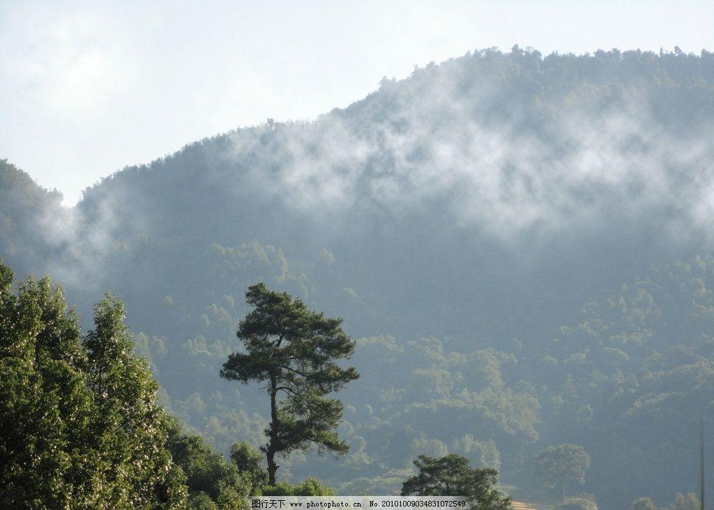 劲松 松树 青山 白云 树林 大自然 山顶 峻岭 蓝天 自然风景 自然景观