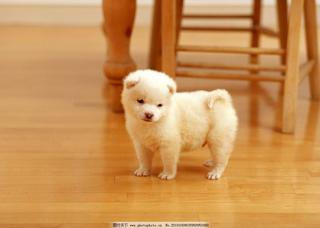 小狗 可爱 家禽家畜 生物世界 摄影 350dpi jpg