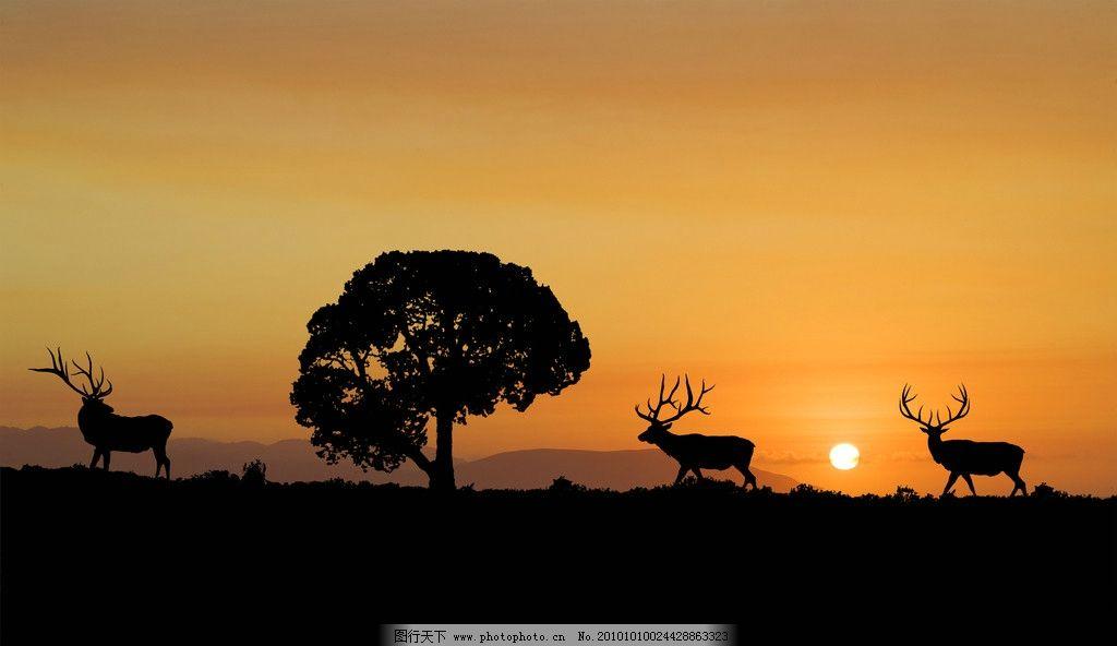 藏羚羊 大树 草地背景 夕阳 天空 大山 山脉 素材 野生动物 生物世界