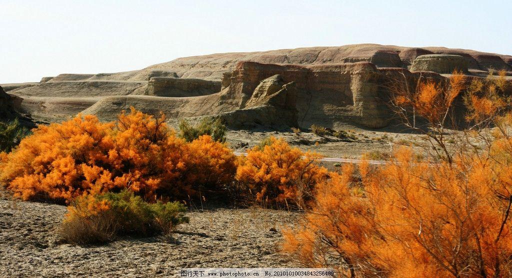 新疆世界魔鬼城 风化城 古堡 沙丘 戈壁 红柳 自然风景 自然景观 摄影