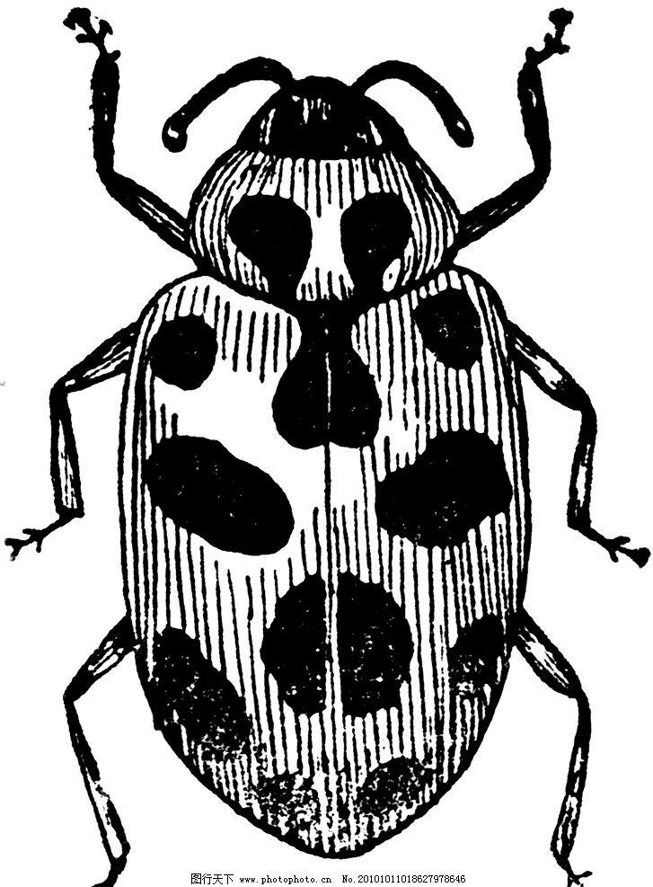 昆虫 甲壳虫 卡通 动漫 黑白 其他 动漫动画 设计 240dpi tif