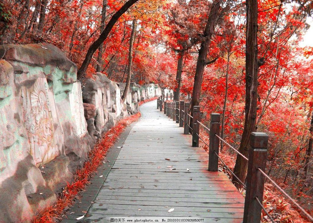 石道 红叶 摄影 木桩 树 树木 枫树 岩石 过道 国内旅游 旅游摄影 72