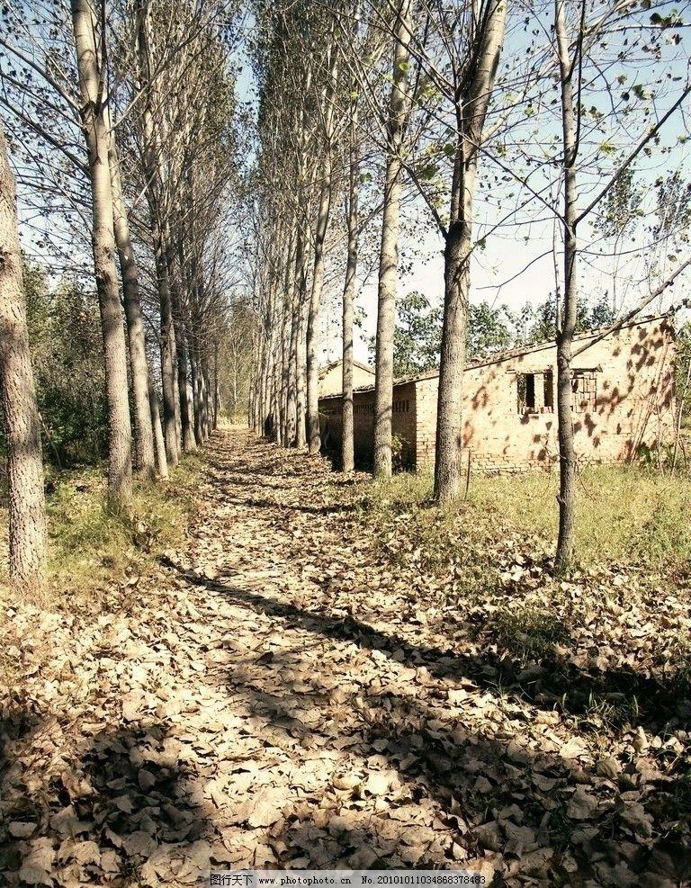 林间小道 落叶 秋天 树木 树林 道路 自然风景 自然景观 摄影 300dpi
