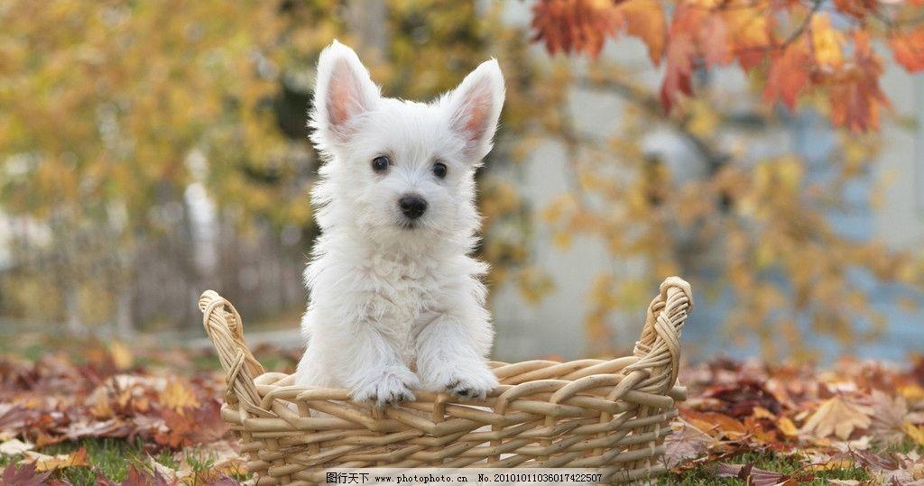 小狗 动物世界 宠物 动物 生物 动物园 野生动物 保护动物 狗狗 其他
