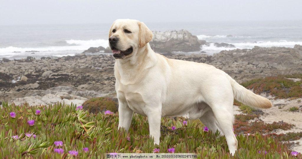 小狗 狗狗 动物 生物 动物世界 动物园 野生动物 其他生物 生物世界