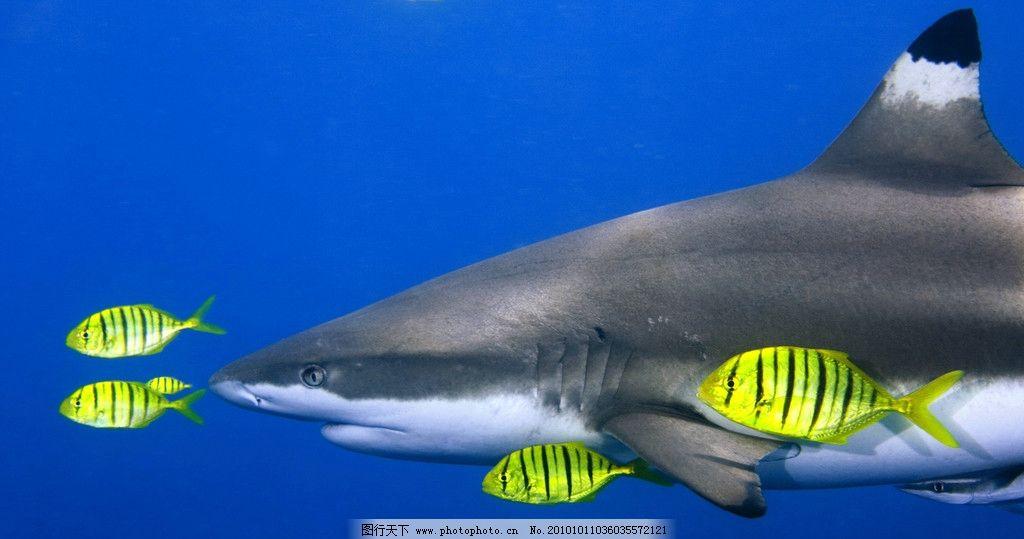 鲸鱼 动物 生物 动物世界 动物园 野生动物 保护动物 海底世界