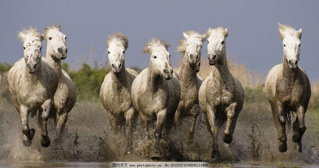 小马 骏马 动物世界图片