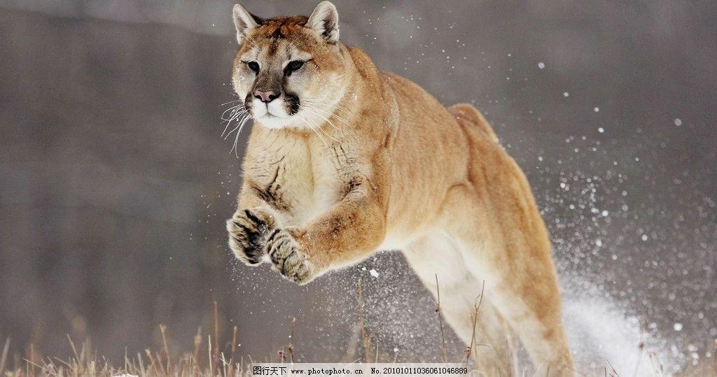 动物世界 野猫 猫咪图片