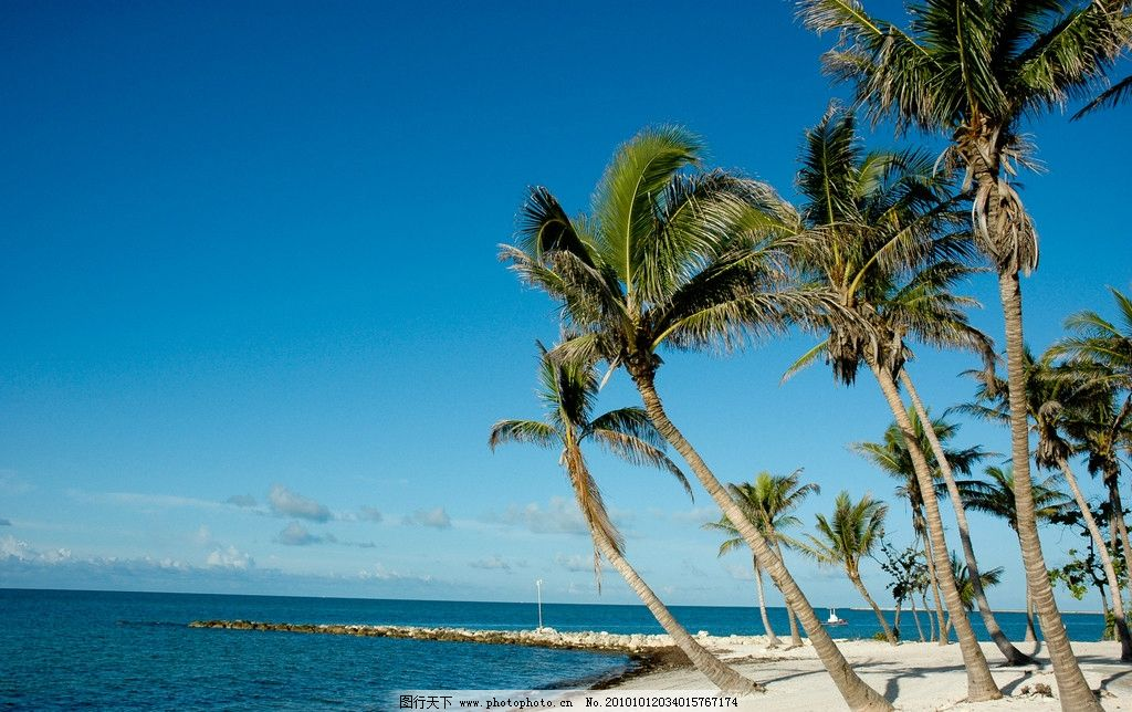 win7桌面壁纸 椰子树