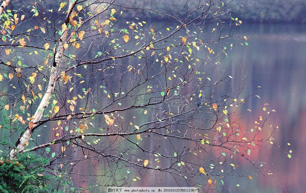 丛林风景图片