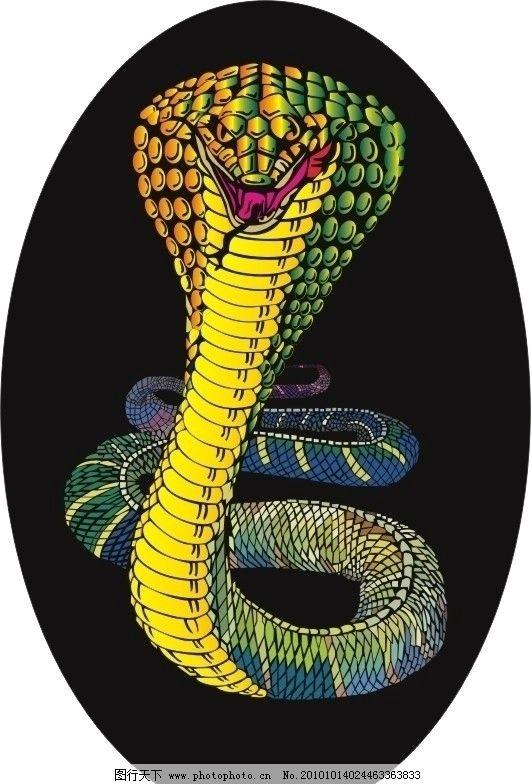 蛇snake 动物图片
