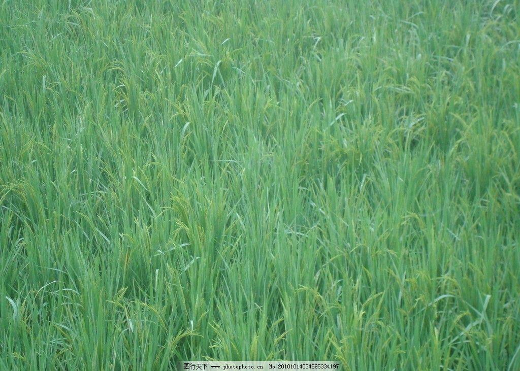 壁纸 草 成片种植 风景 绿色 植物 种植基地 桌面 1024_731
