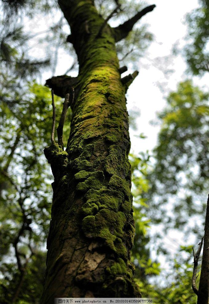 枯木 树叶 苔藓 青苔 绿苔 旅游 风景 树木 树 树木树叶 生物世界