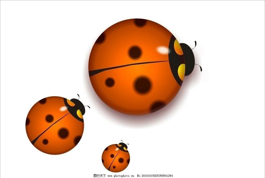 瓢虫图片图片