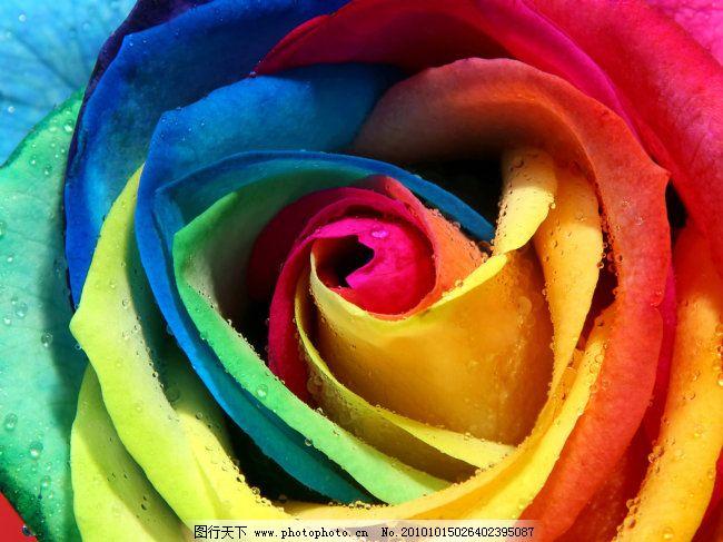 彩虹七色花 彩虹七色花免费下载 非主流 花朵 图片素材 风景生活旅游图片