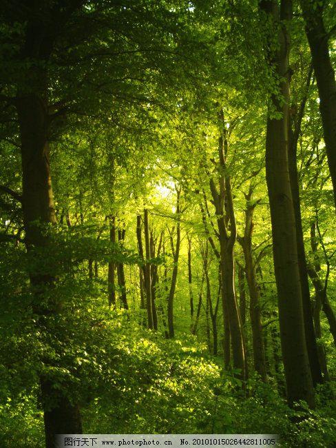 绿色 森林 树木 阳光 绿色 森林 阳光 树木 图片素材 风景 生活 旅游