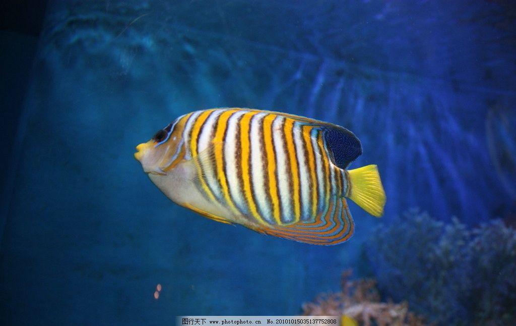 海水鱼 条状鱼 条纹鱼 西安水族馆 西安海洋馆 水里游的 海洋生物