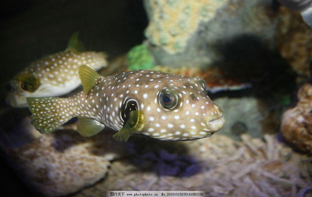 海洋鱼图片图片