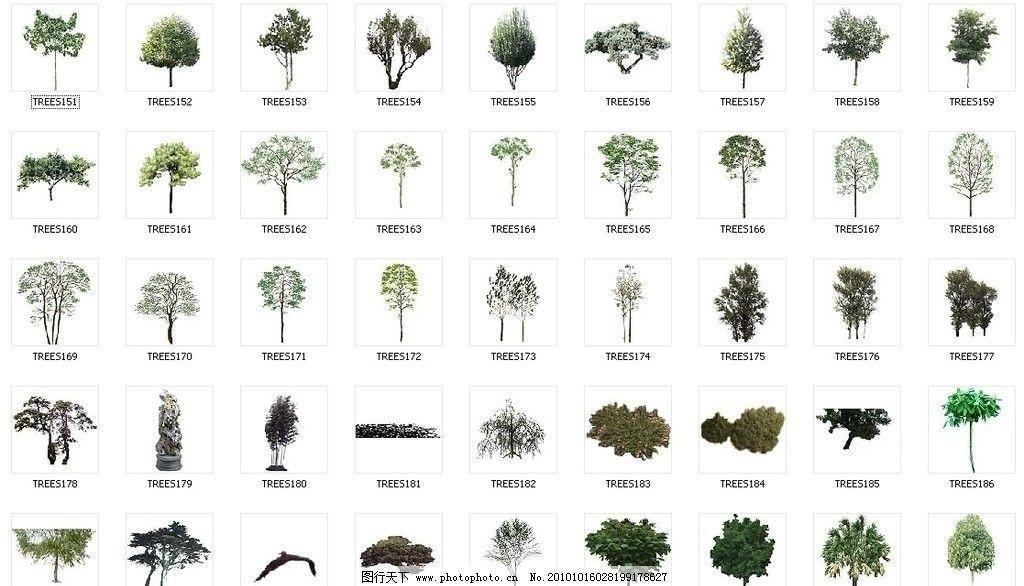 植物素材 植物后期素材 效果图素材 环艺 小品 园林植物 树 树木