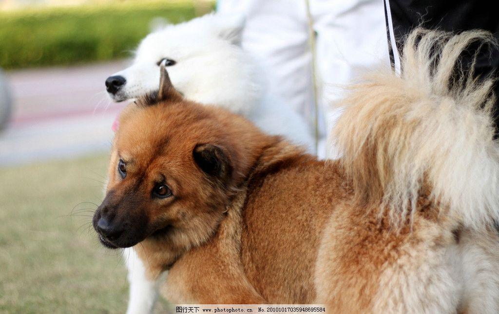 狗狗可爱表情 狗狗 打架