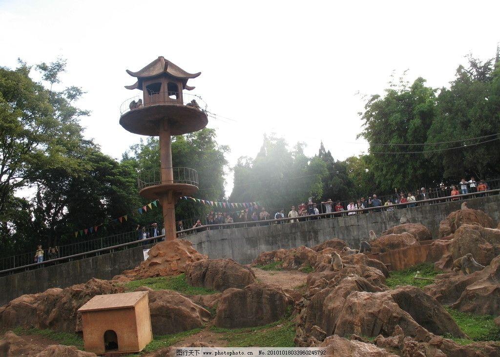 动物园 昆明动物园 猴子