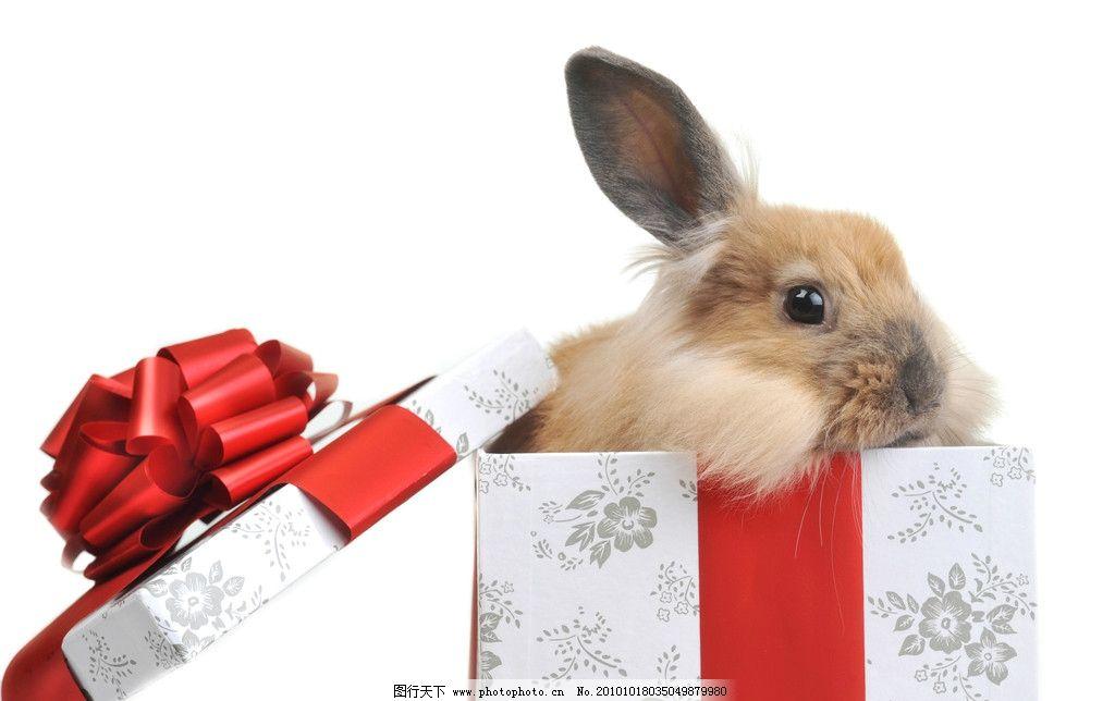 可爱兔子礼品盒图片