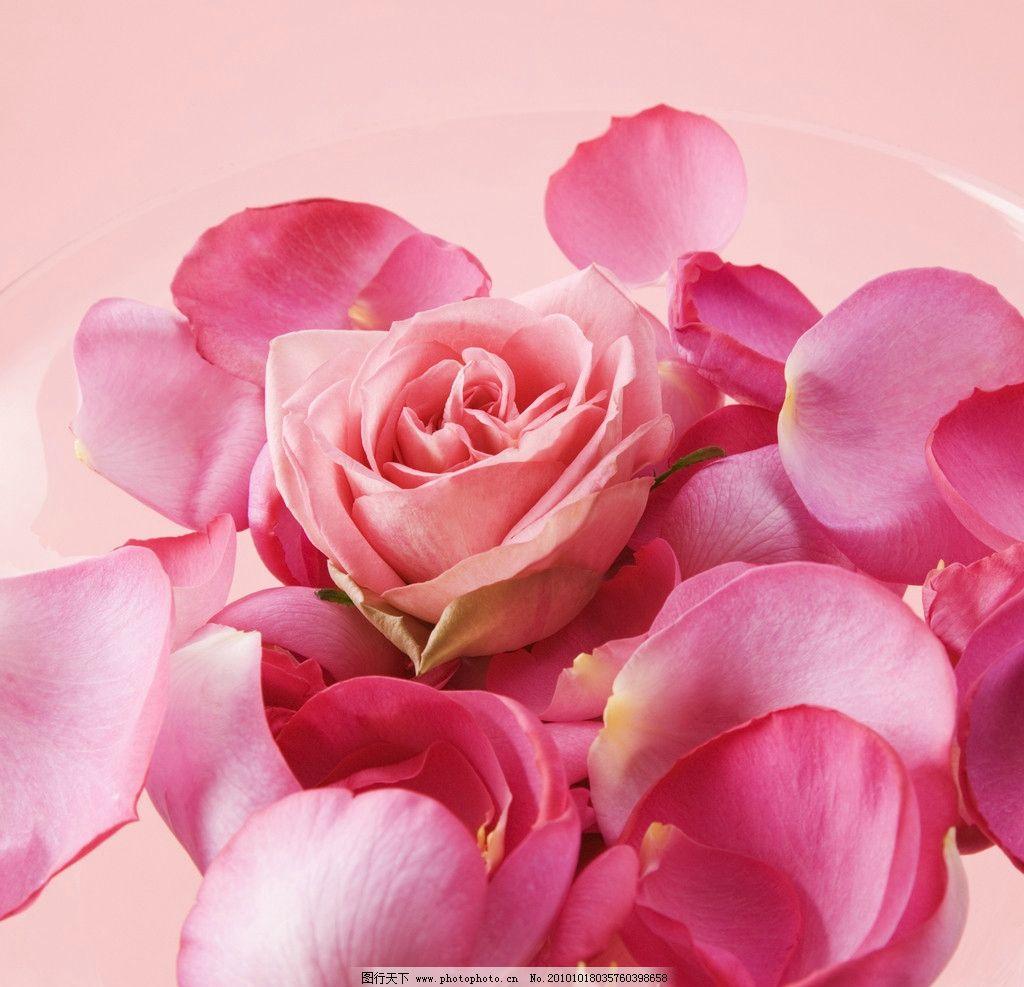 花瓣 花 花朵 花纹 粉色 玫瑰花瓣 背景 玫瑰 花草 温馨 泡泡 350dpi