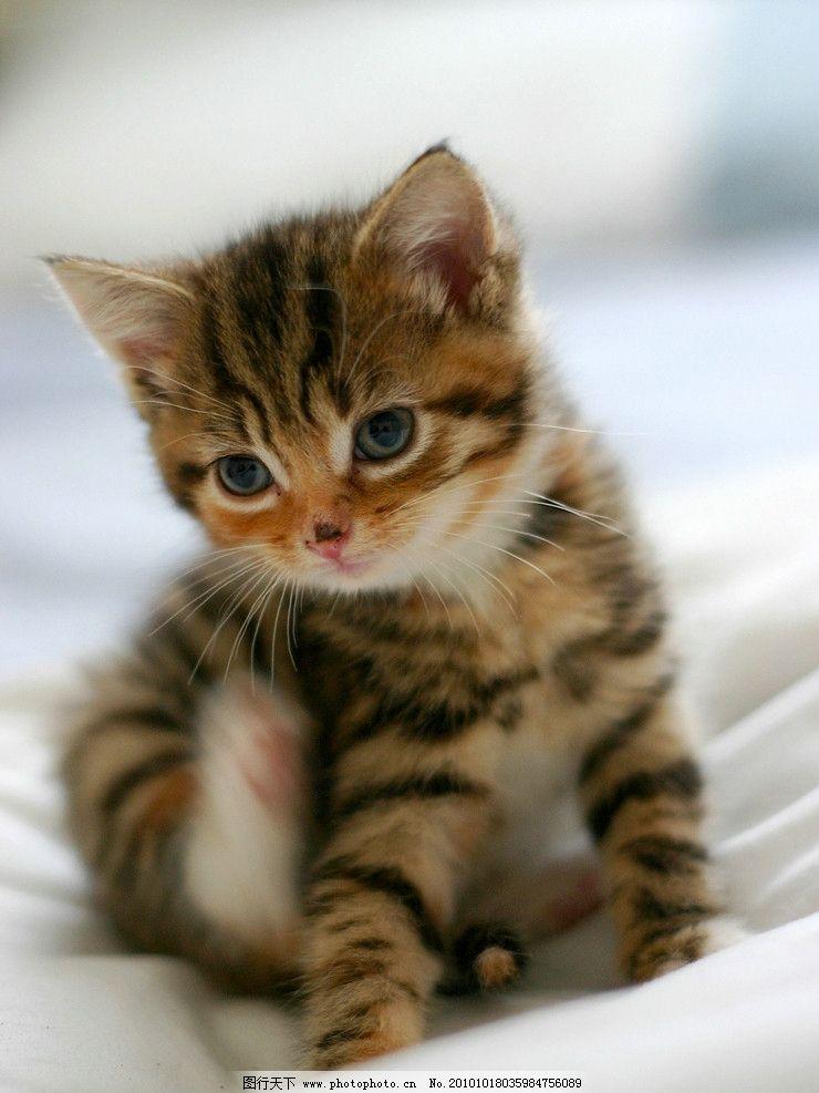 猫儿写真 生物 动物 宠物 小猫 摄影 照片 写真 家禽家畜 生物世界