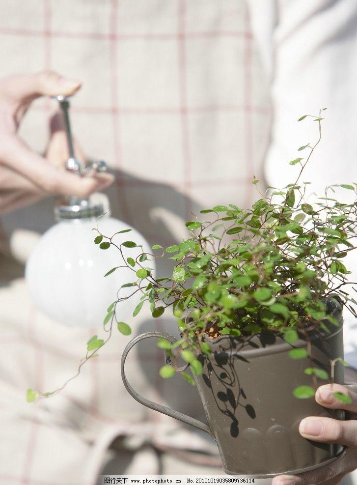盆景 小树苗 树叶 浇水 绿叶 植物 树木树叶 生物世界 摄影 350dpi