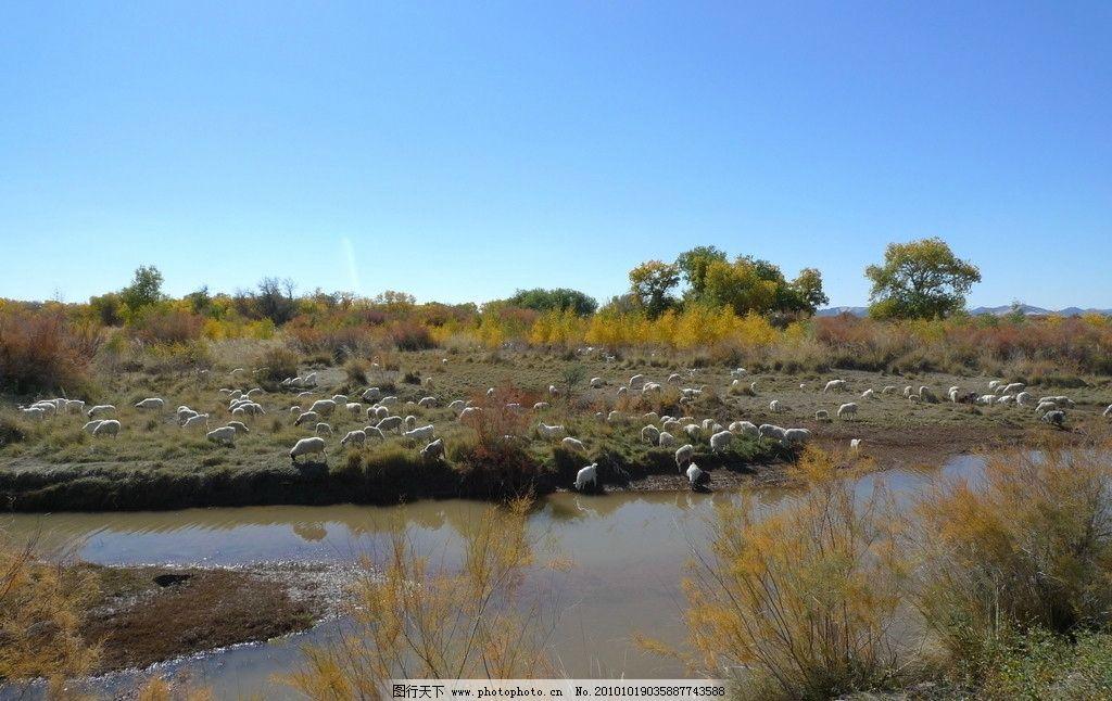 沙漠绿洲 戈壁滩 羊群 小河 胡杨 红柳 蓝天 白云 群山 自然风景