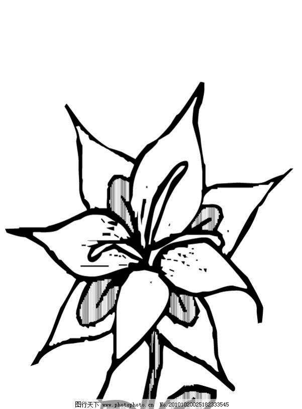 百合花 黑白 线稿 花卉图鉴 花 花草 生物世界 矢量 ai