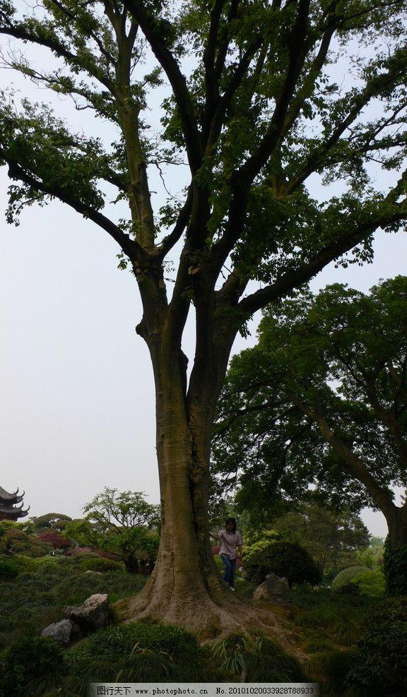 大树 杭州 杭州西湖 植物园 园林 园林设计 景观设计 旅游拍摄 国内