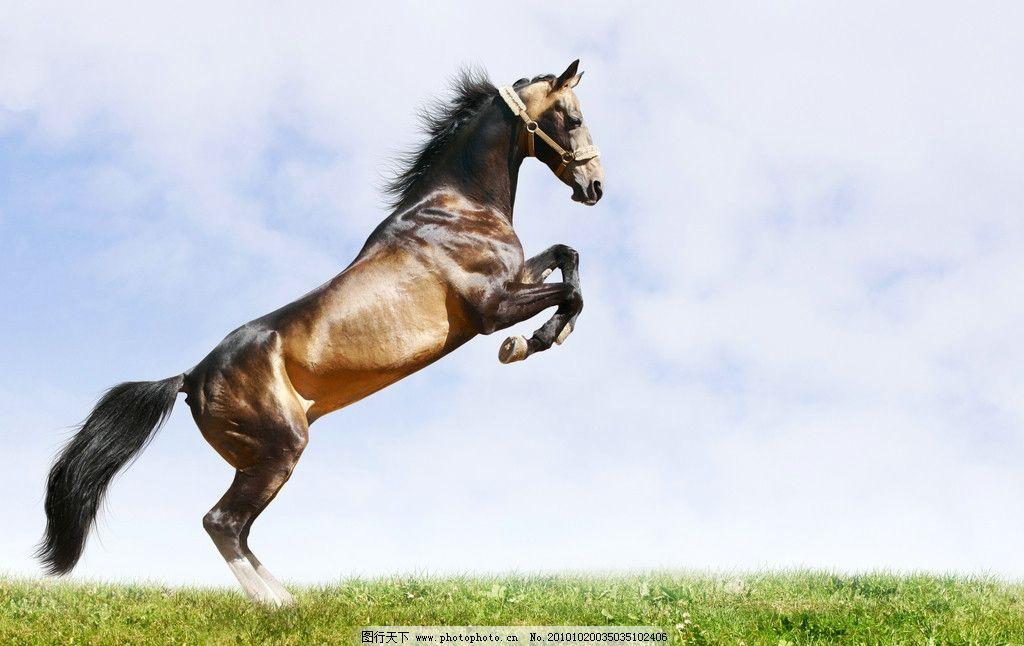 奔跑的骏马 草地 飞奔 草原 蓝天 白云 动物 家禽家畜 生物世界 野生