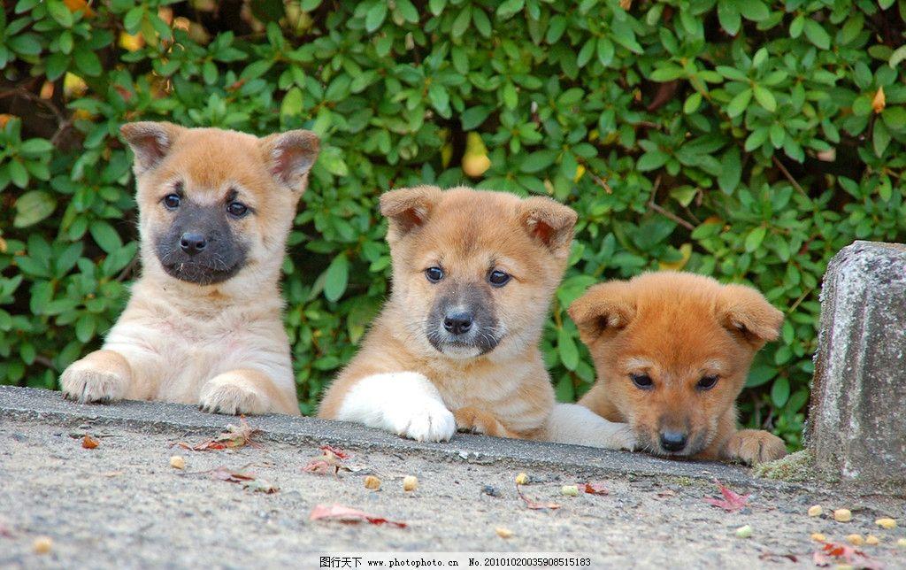 狗儿写真 生物 动物 宠物 小狗 摄影 照片 摄影