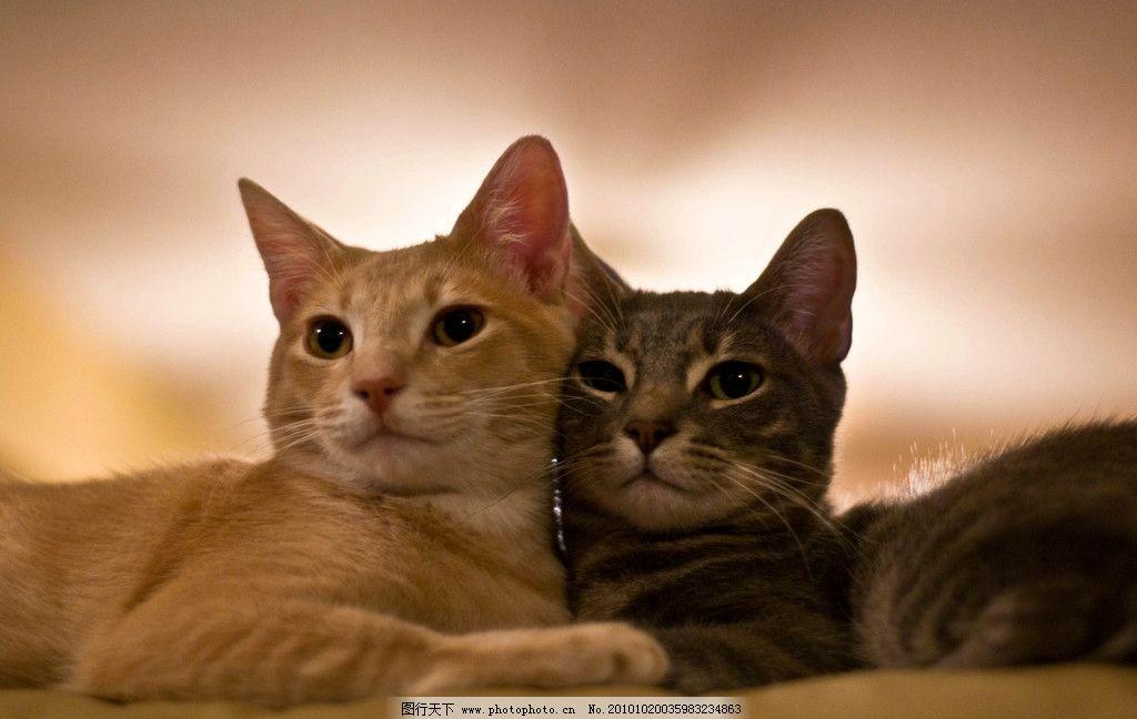 猫儿写真 生物 动物 宠物 小猫 摄影 照片 写真 家禽家畜 生物世界 摄