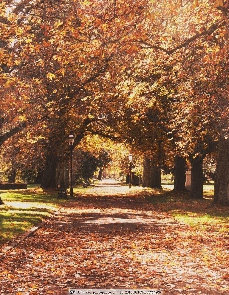 落叶 枯叶 美丽风光 风景图片 美丽风景 风光图片 秋季风光 自然风景
