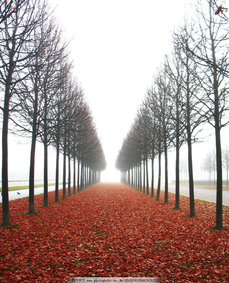 秋天树木 落叶 枯叶 美丽风光 风景图片 美丽风景 风光图片 秋季风光