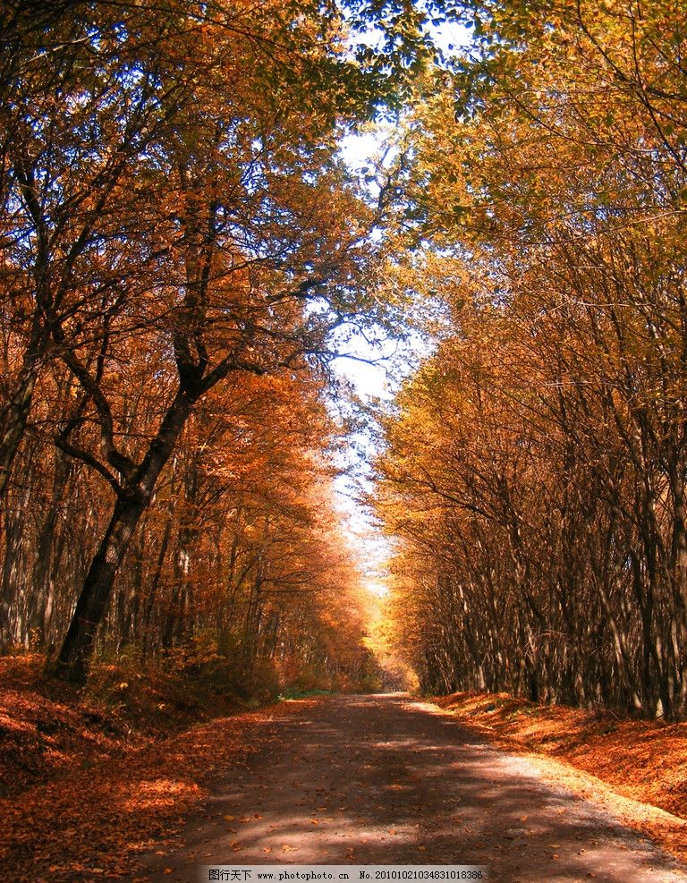 秋季风光 风光图片设计 设计图片 美丽景色 秋天 秋季 秋季景色 秋天景色 落叶树木 秋天树木 树林 林间小路 落叶 枯叶 美丽风光 风景图片 美丽风景 风光图片 自然风景 自然景观 摄影 72DPI JPG