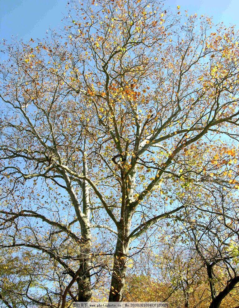 美丽景色 秋天 秋季 秋季景色 秋天景色 落叶树木 树木 美丽风光 风景