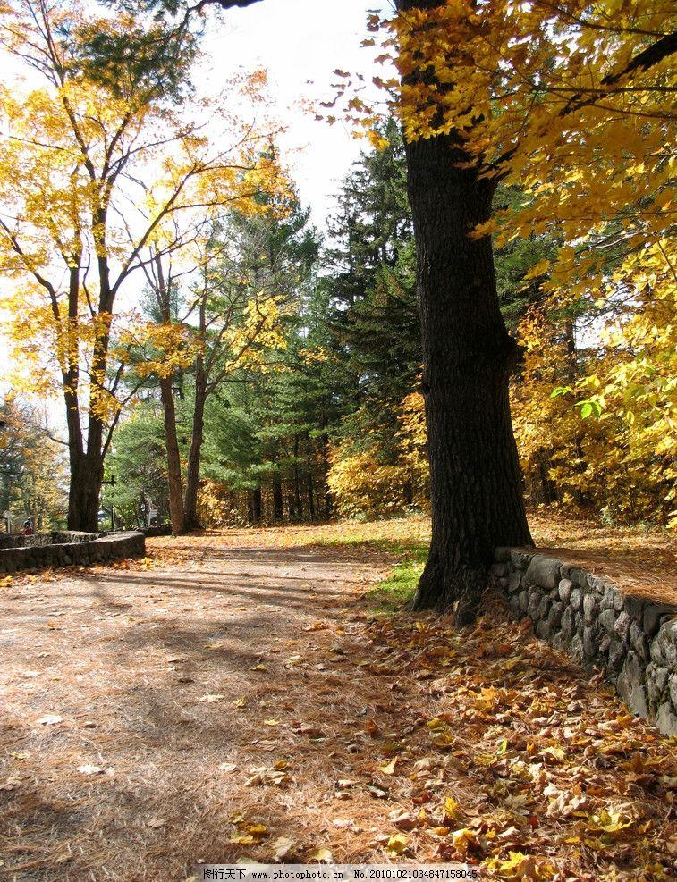 壁纸 风景 森林 桌面 757_987 竖版 竖屏 手机