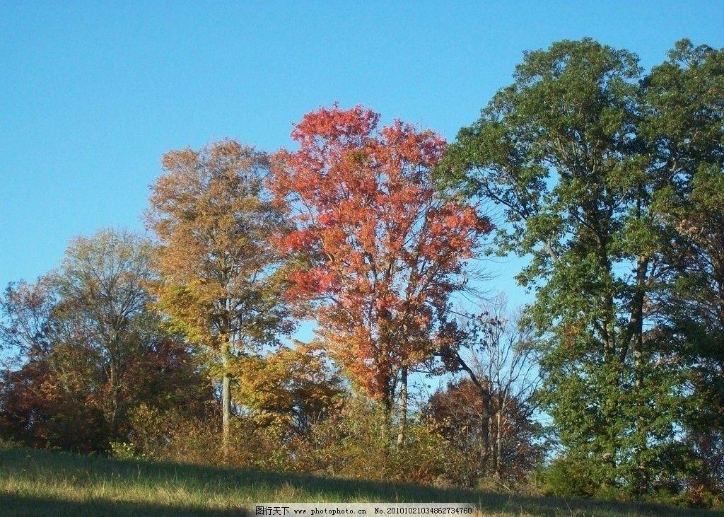 秋天树木 树林 美丽风光 风景图片 美丽风景 风光图片 自然风景 自然