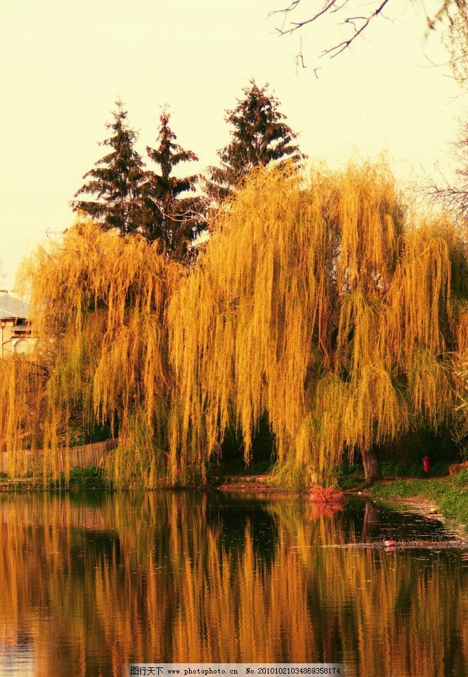 秋天树木 湖泊 美丽风光 风景图片 美丽风景 风光图片 秋季风光 自然